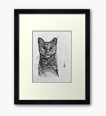 Charcoal Puss Framed Print