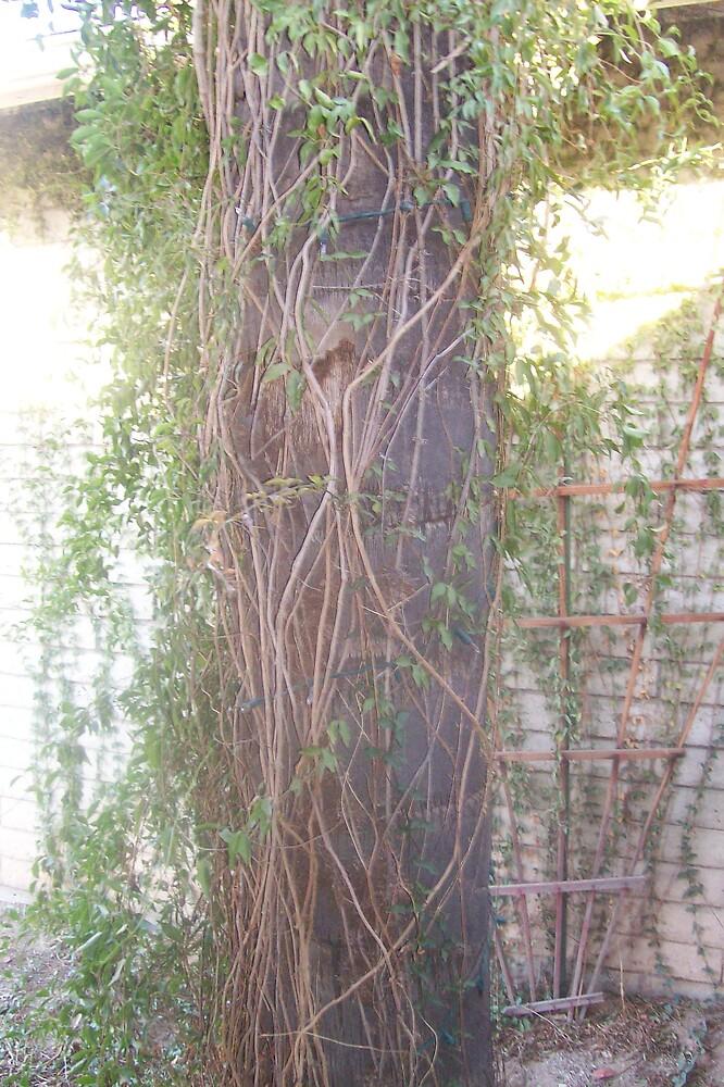 Growing tree by bviva733