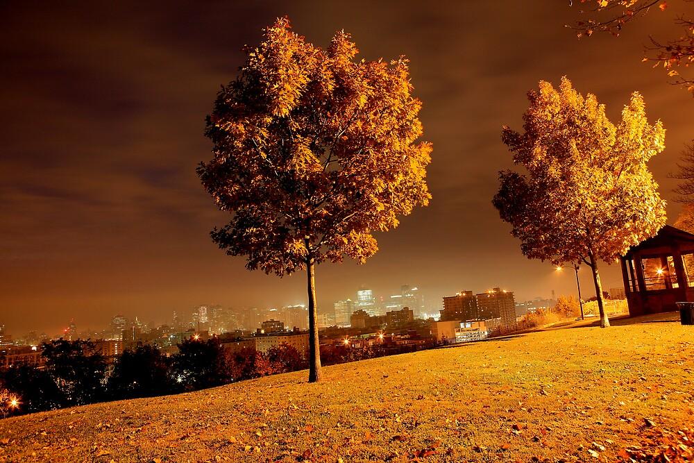 Urban Nature by pmarella