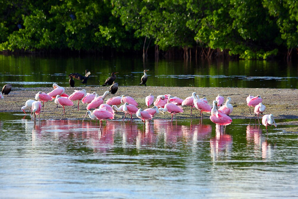 Spoonbill Convention by noffi