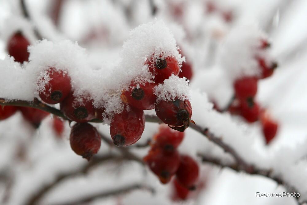 Snow Berries  by GesturesPhoto