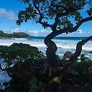 Maui Hamoa Beach by photosbyflood