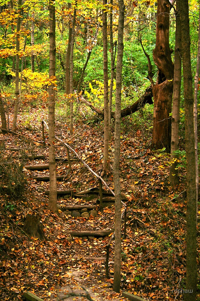Forest Steps by rdshaw