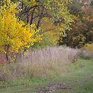Yellow Tree, Grass Trail by rdshaw