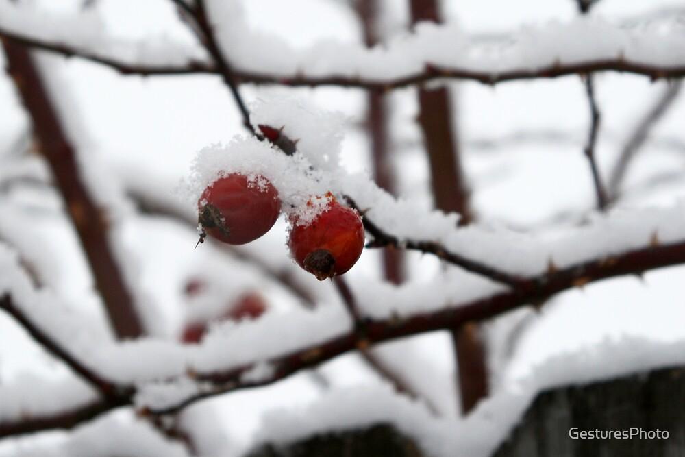 Snow Berries III by GesturesPhoto