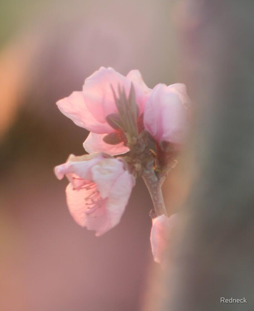 Peach Blossom by Redneck