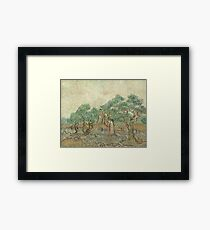 Vincent van Gogh, The Olive Orchard Framed Print