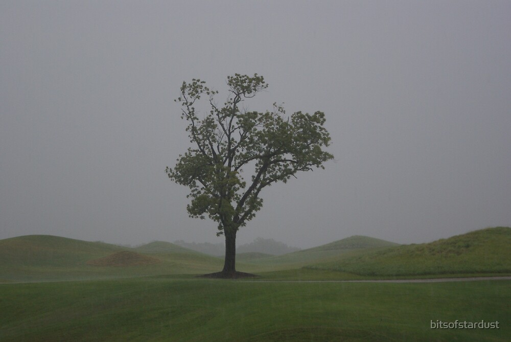 Lone tree on the golf course by bitsofstardust