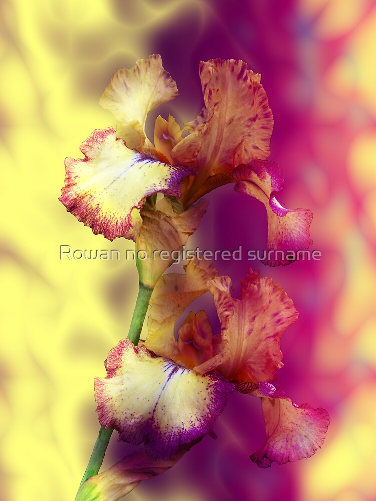 Iris by Rowan no registered surname