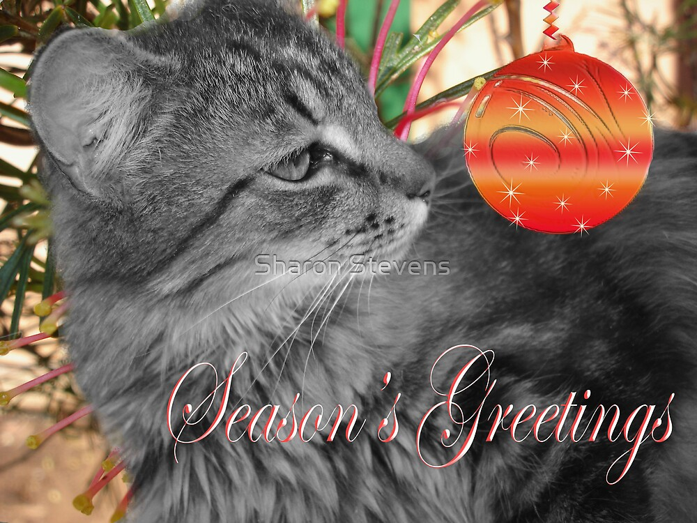 Jeb the Christmas Cat by Sharon Stevens