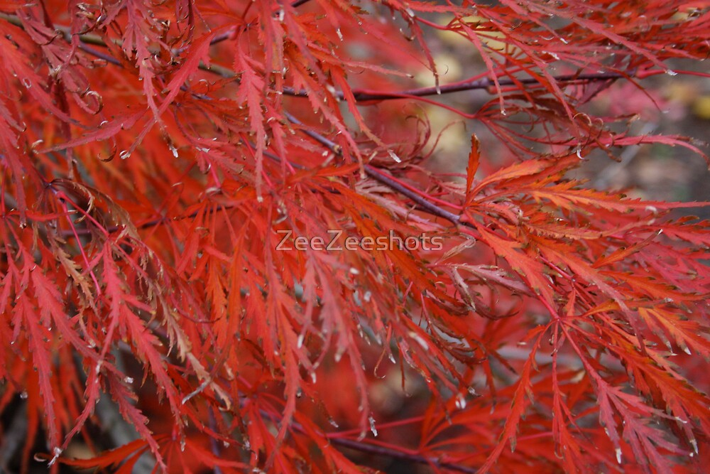 What kind of tree is this? Sandy Got it right again.. Japanese Red Maple Tree by ZeeZeeshots