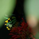 In A Dream I had Wings by Pamela Hubbard