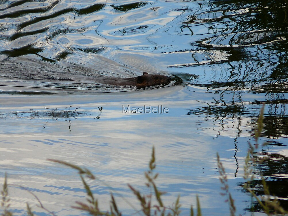 Bob, leaving Ripples In the Water by MaeBelle