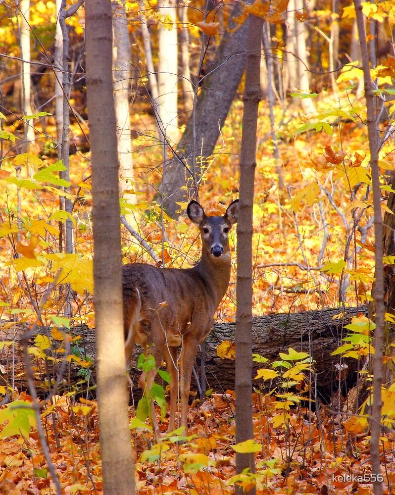 Framed In The Woods  by keleka656
