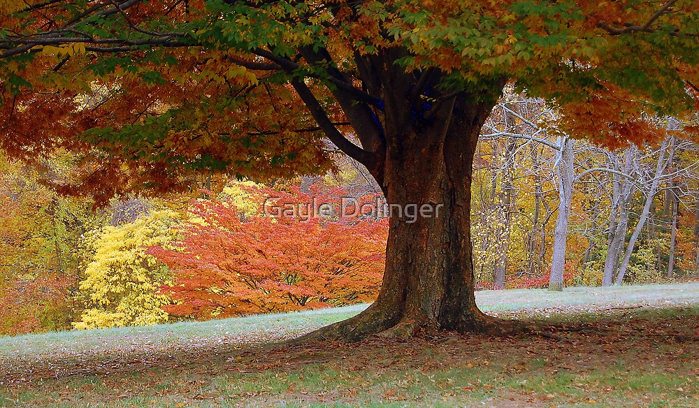 Under The Tree by Gayle Dolinger