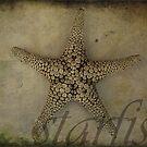 Starfish by Melanie  Dooley