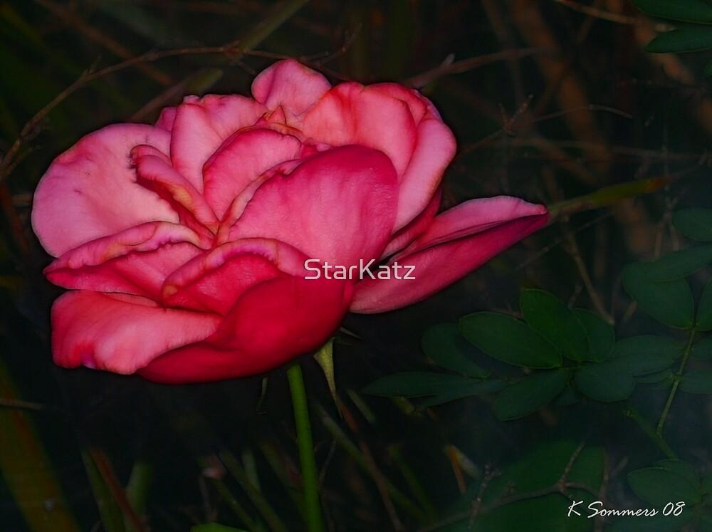 Pink Beauty by StarKatz