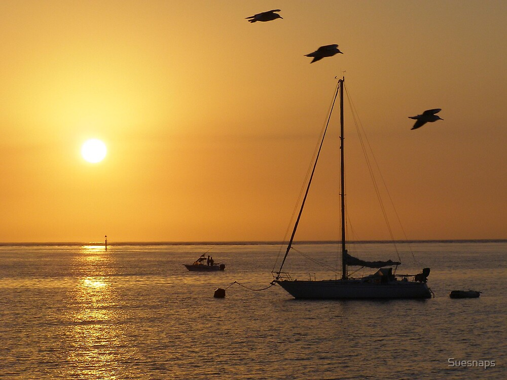 Sunrise Beauty by Suesnaps