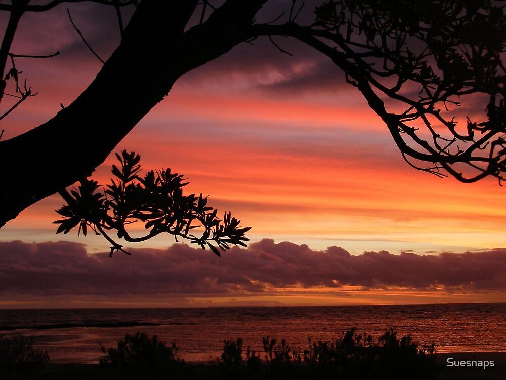 Sunset Beauty by Suesnaps