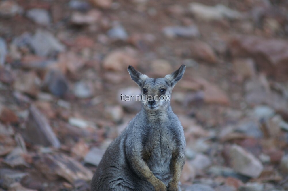 g'day g'day :-) by tarnyacox