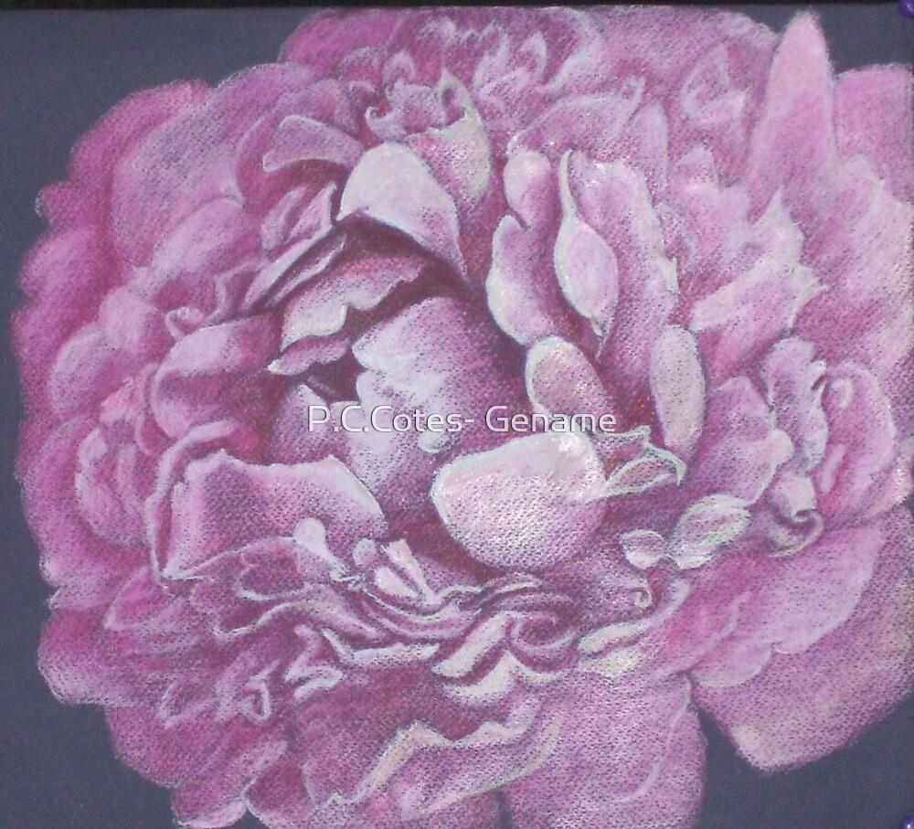 Pink Peony by P.C.Cotes- Gename