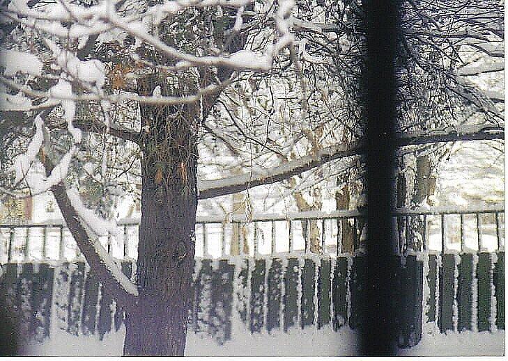 cold winter by oreobeggar