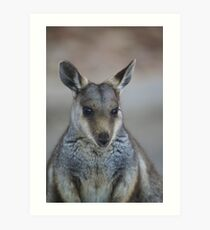 whistful wallaby Art Print