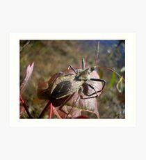Stink Bug Art Print