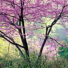 Redbud Tree by Dency Kane