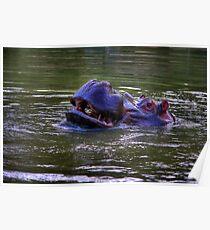 Hippopotamus amphibius Poster