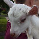 Goat Kid by Lydia-Ham