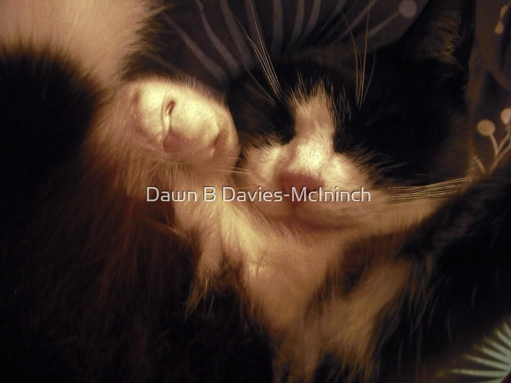 In Nap Land by Dawn B Davies-McIninch
