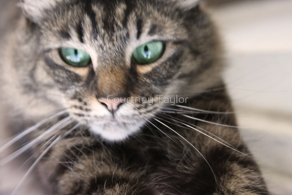 Smudge up close by Courtney Taylor