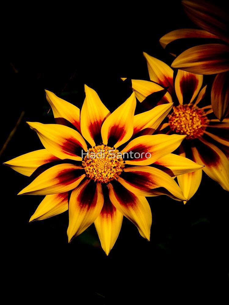 Stunning Flower by rainbow1638