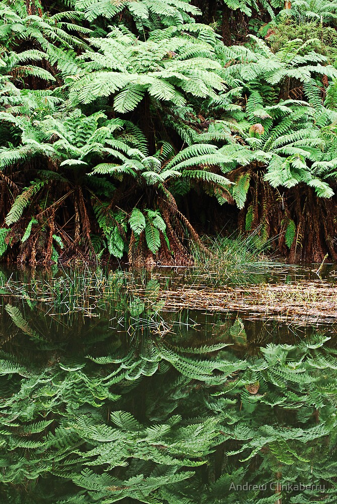 Lake Elizabeth Ferns by Andrew Clinkaberry