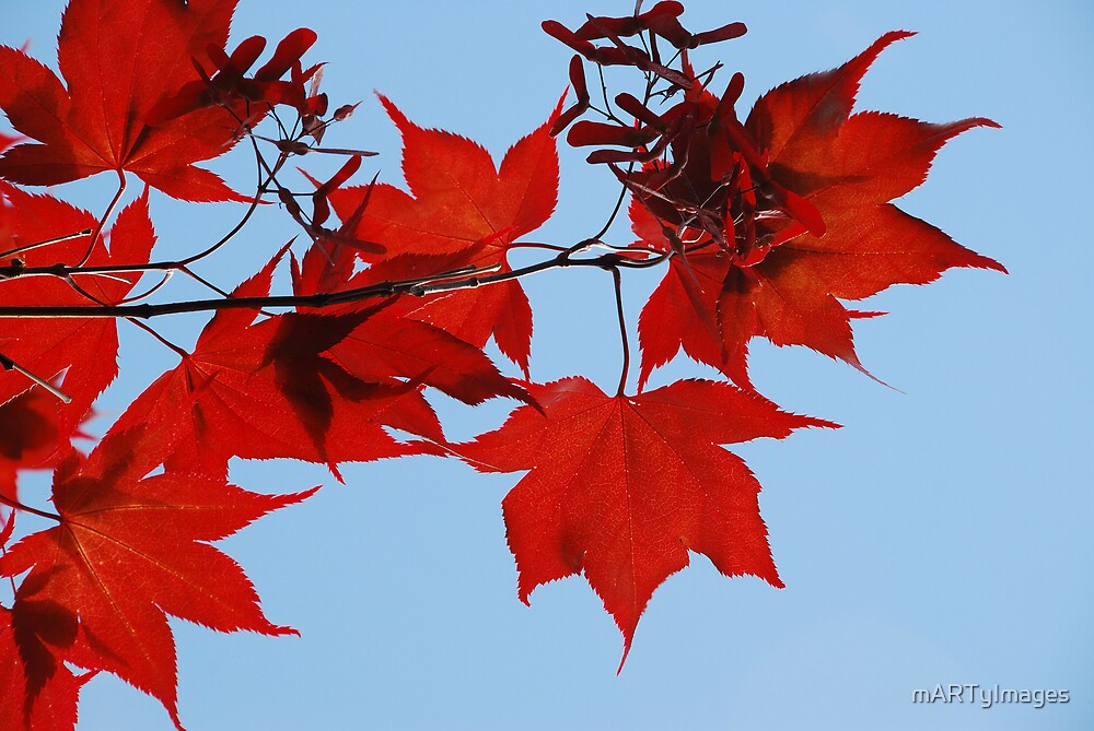 Red Fall by mARTyImages