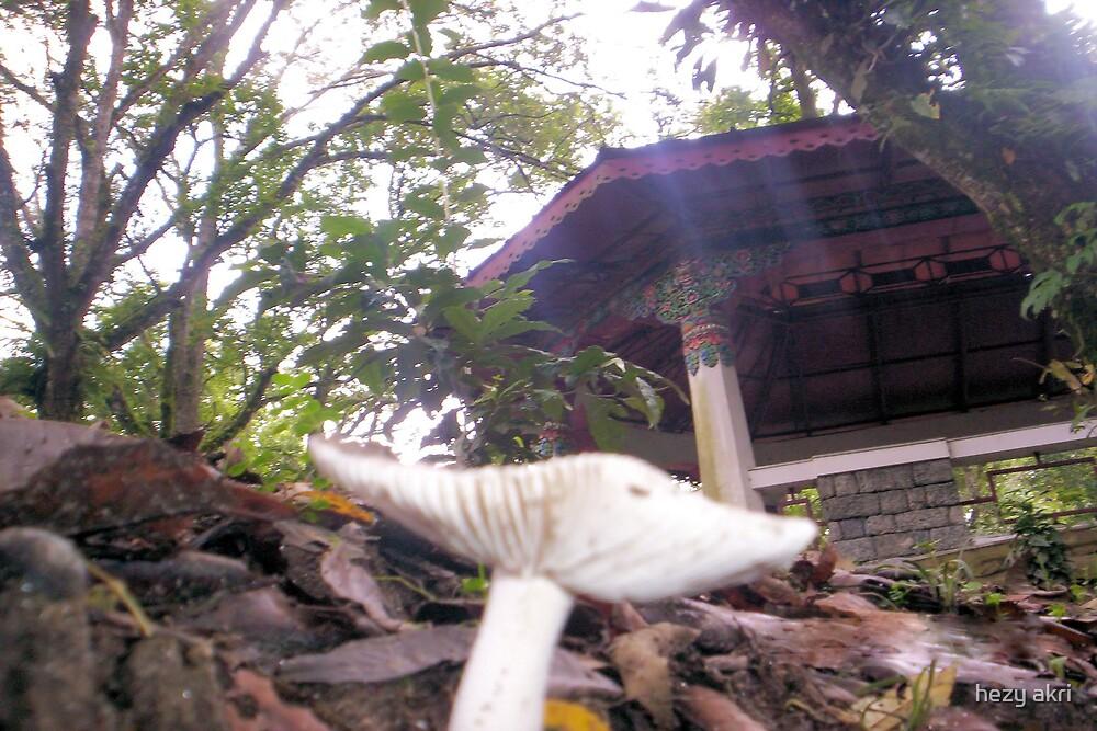 mushroom view  by hezy akri