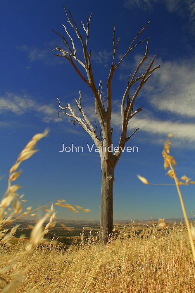 Tree by John Vandeven