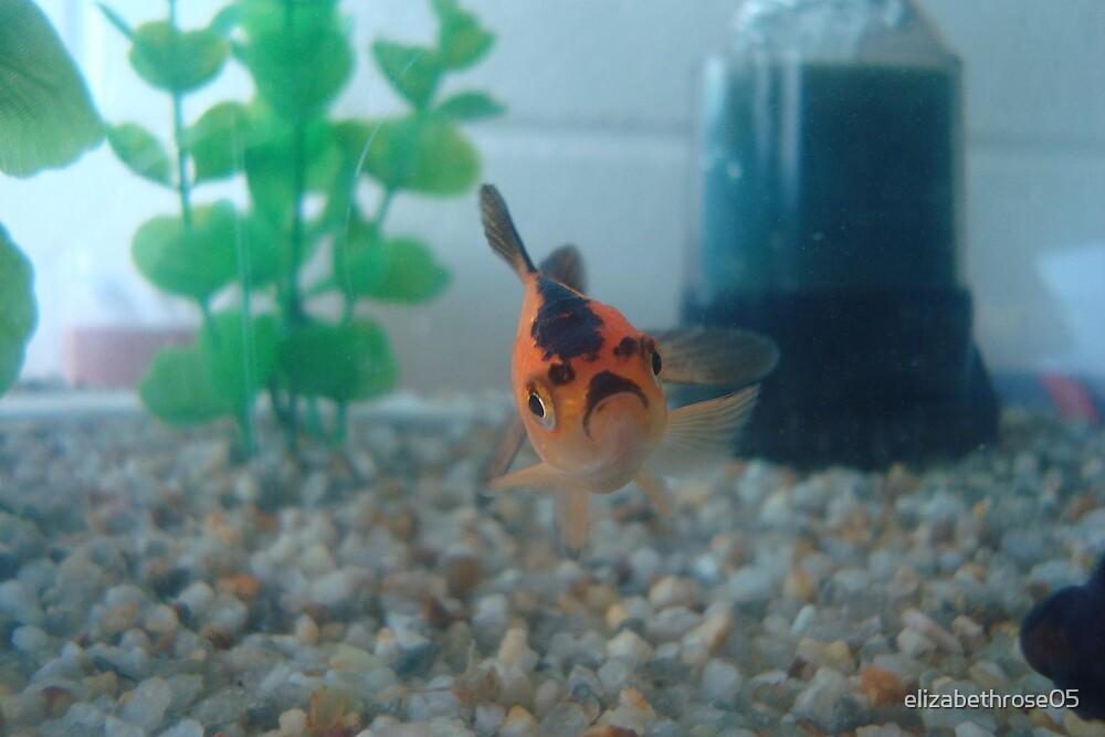 Goldfish by elizabethrose05