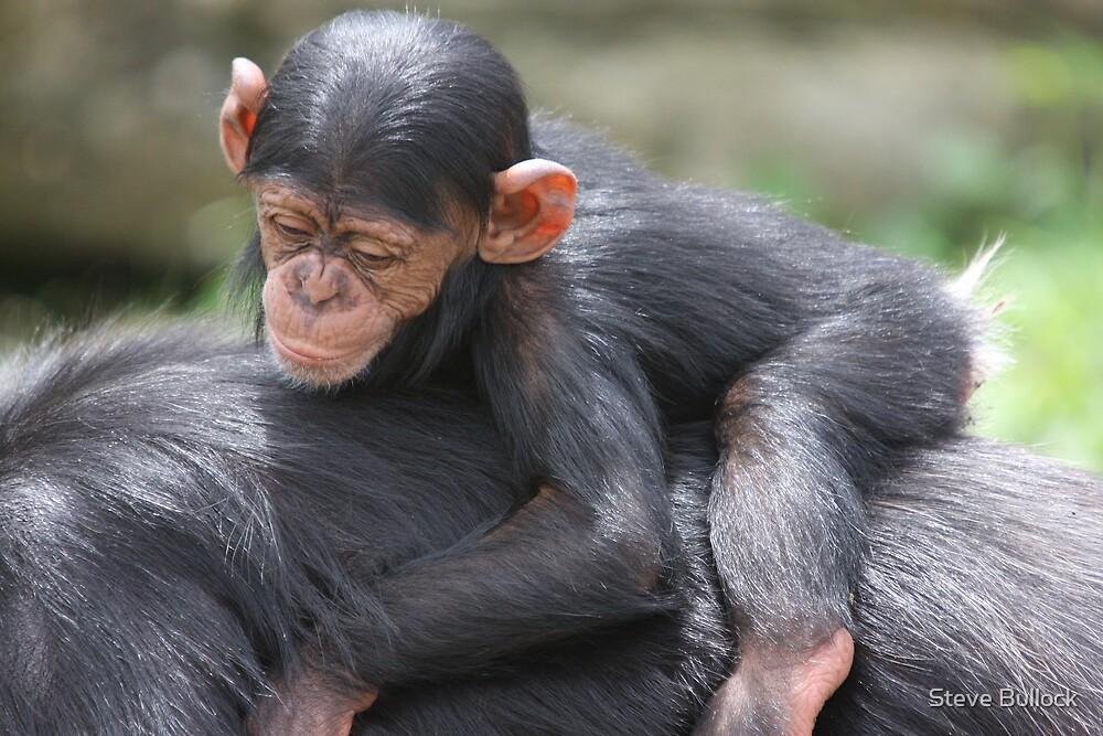 Baby Chimpanze by Steve Bullock