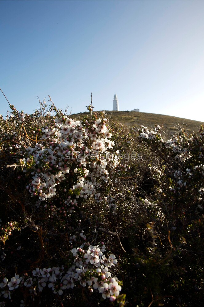 lighthouse & flowers by stickelsimages