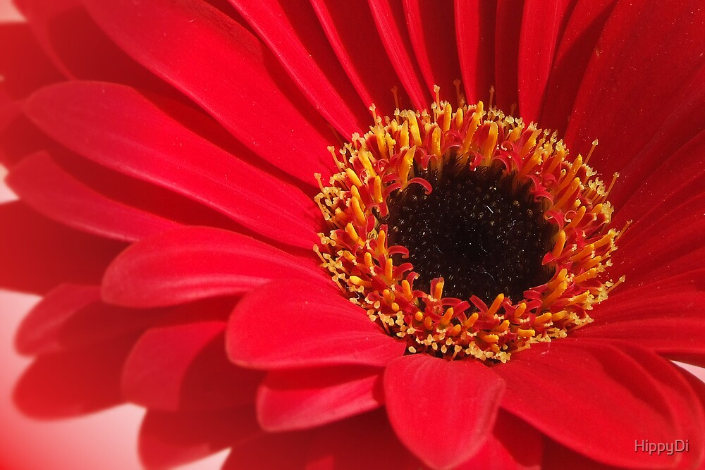 Red Gerbera 2 by HippyDi