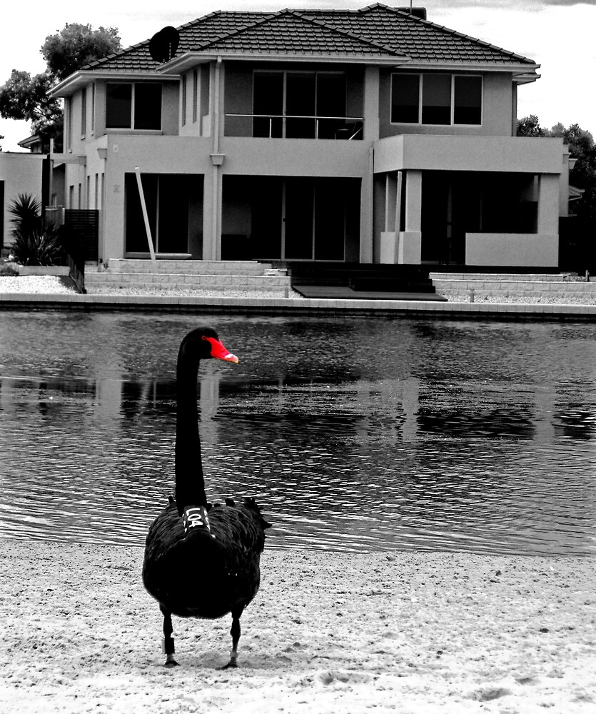 Suburban Swan by Simmone