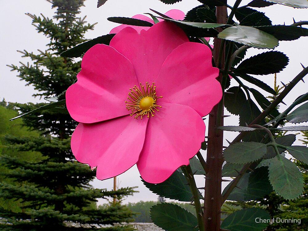 Roseisle Rose by Cheryl Dunning