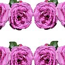 Really Magically Mauve Roses by KazM