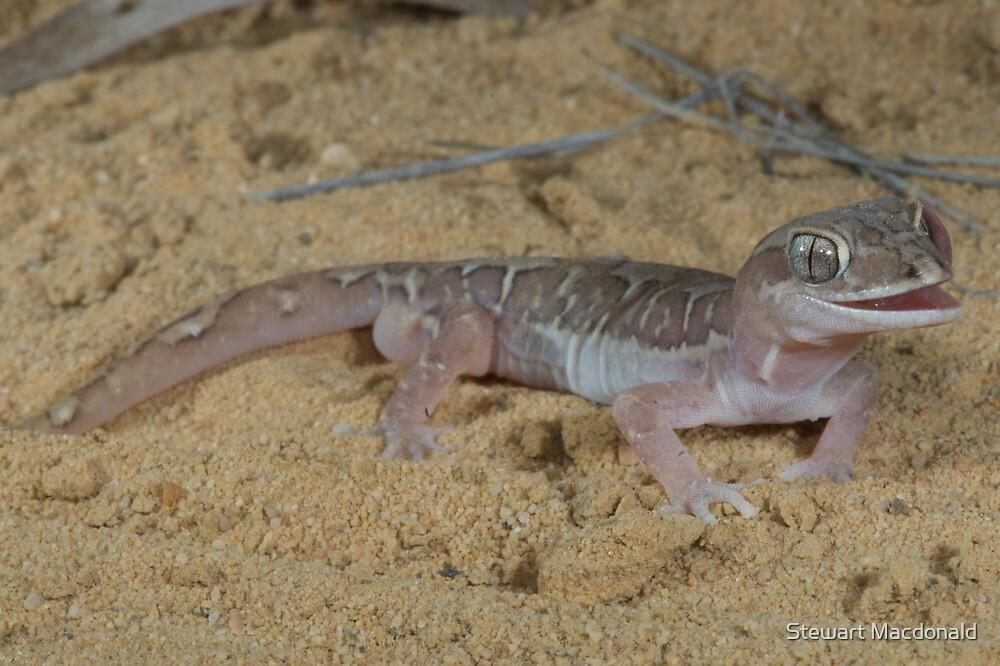 Box-patterned gecko by Stewart Macdonald