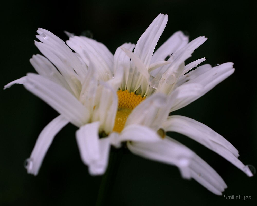 Daisy In Disarray by SmilinEyes