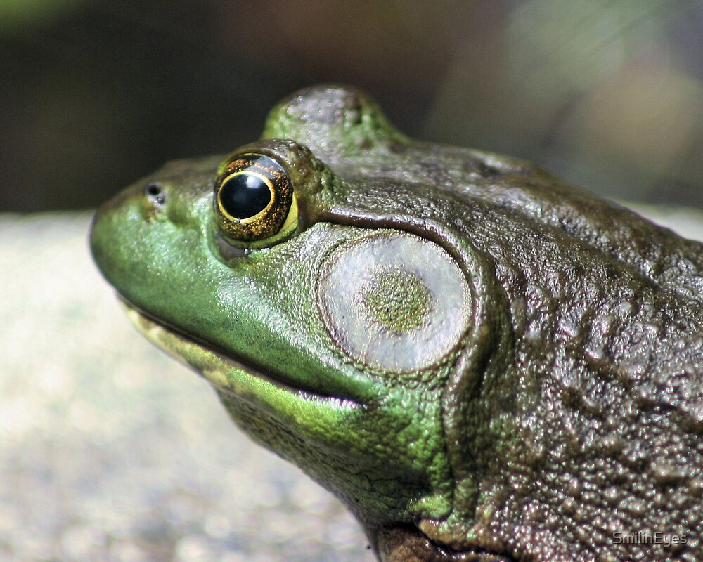 Bullfrog Thoughts by SmilinEyes