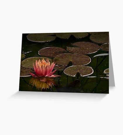 Water lily lights up dark pond Greeting Card