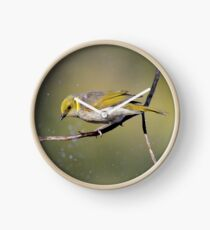 Bath time- Yellow Plumed Honeyeater Clock